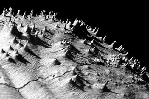 asteroides-5-1