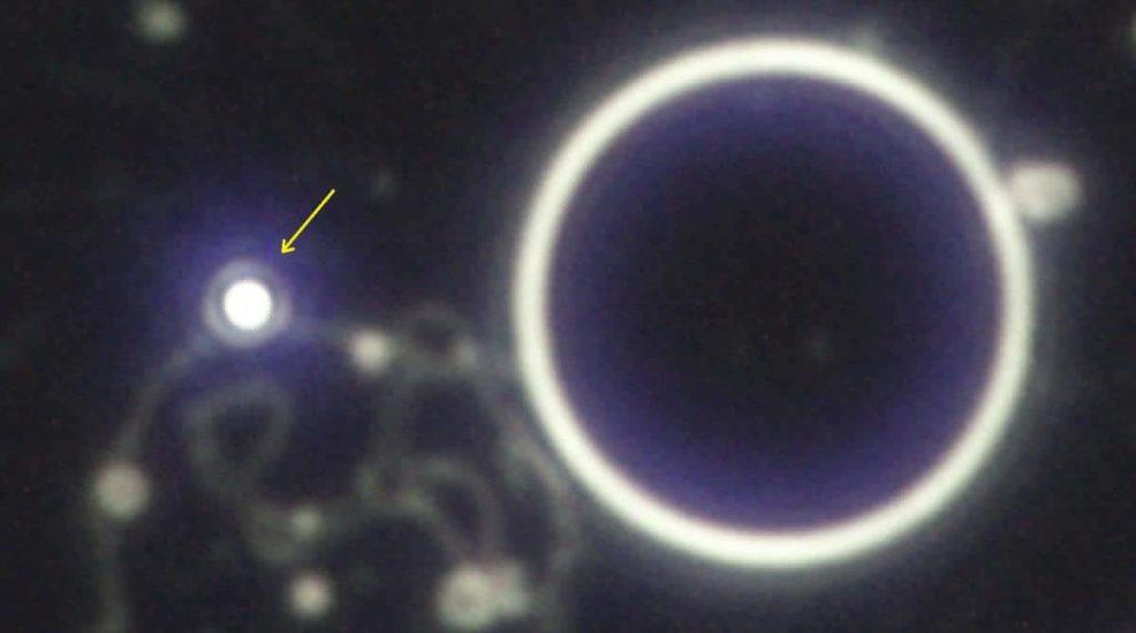 Partes del Microscopio campo oscuro