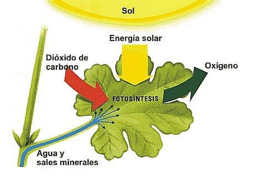 el-sol-como-fuente-de-energía-14