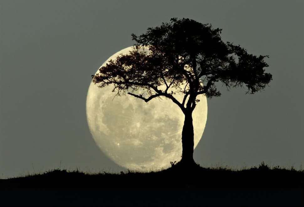 fases-etapas-o-estaciones-de-la-luna 39