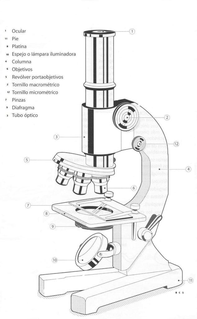Partes del Microscopio compuesto