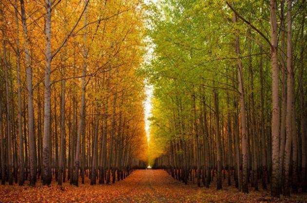 caea8fa10e67 Solsticio: de invierno, verano, otoño, primavera y mucho más