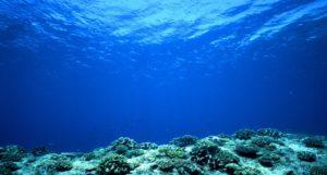 Océano: ¿Qué es?, mapa, profundidad, flora, fauna y más