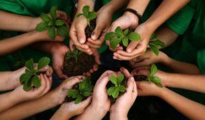 Recursos Naturales: ¿Qué son?, Clasificación, Explotación, Conservación y Más