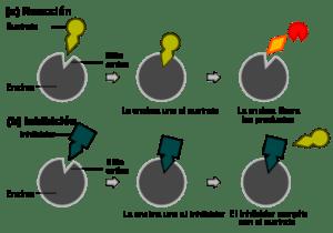 Energía Térmica: Historia, ¿Qué es?, Características, Importancia y Más