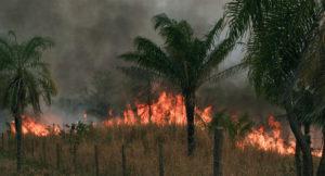 Incendios Forestales: ¿Qué son?, Tipos, Causas, Consecuencias y Más