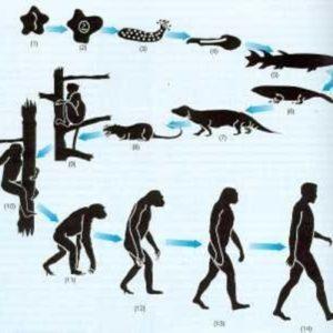 Evolución de la Tierra: lo que no Sabes Sobre los Cambios de Nuestro Planeta