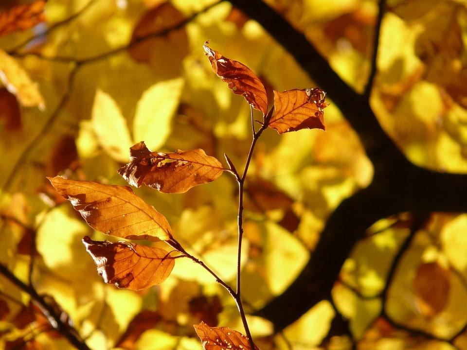 otoño y mas