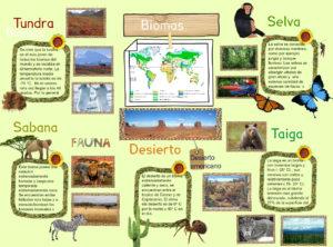 Ecosistema: ¿Qué es?, Tipos, Características, Importancia y Más