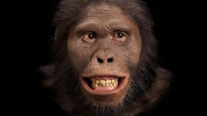 Evolución del Hombre: ¿Qué es?, características, etapas y más