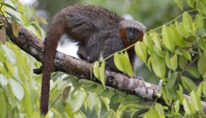 Amazonia: ubicación, ¿Qué es? relieve, flora, fauna y más