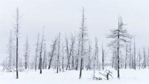 Taiga: ubicación, ¿Qué es? sus características y mucho más