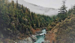 Descubre todo sobre los Bosques, uno de los Ecosistemas de la Tierra