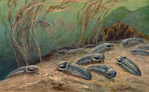 Paleontología, lo que aún no sabes de esta ciencia