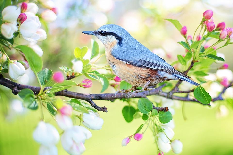 primavera y mas