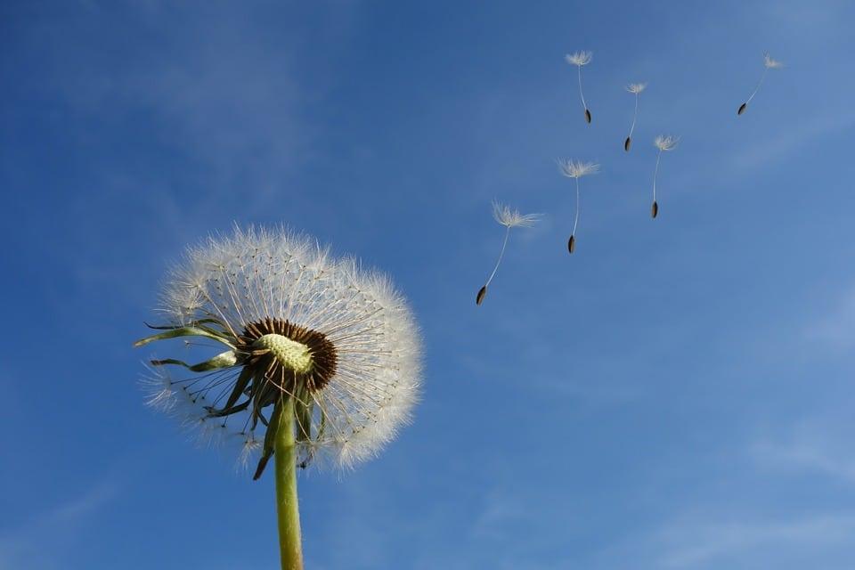 viento catabático y mas